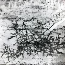 drawing, sargasse